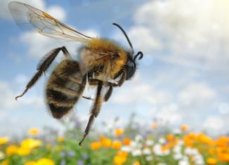 Salvar las abejas es salvar la vida
