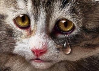 Animals feel pain like humans